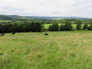 TO AUCTION - Tuesday 3rd October 2017 - Land at Uppacott, Moretonhampstead