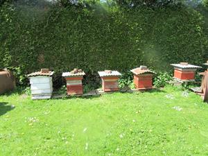 Sale of Bees, Bee Hives & Apiary Equipment, Nr South Brent - Saturday 1st July 2017