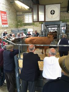 June Cattle Fair at Newton Abbot Market on Wednesday 7th June