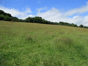 Auction of Land Near Chagford - 19th September at 6.00pm