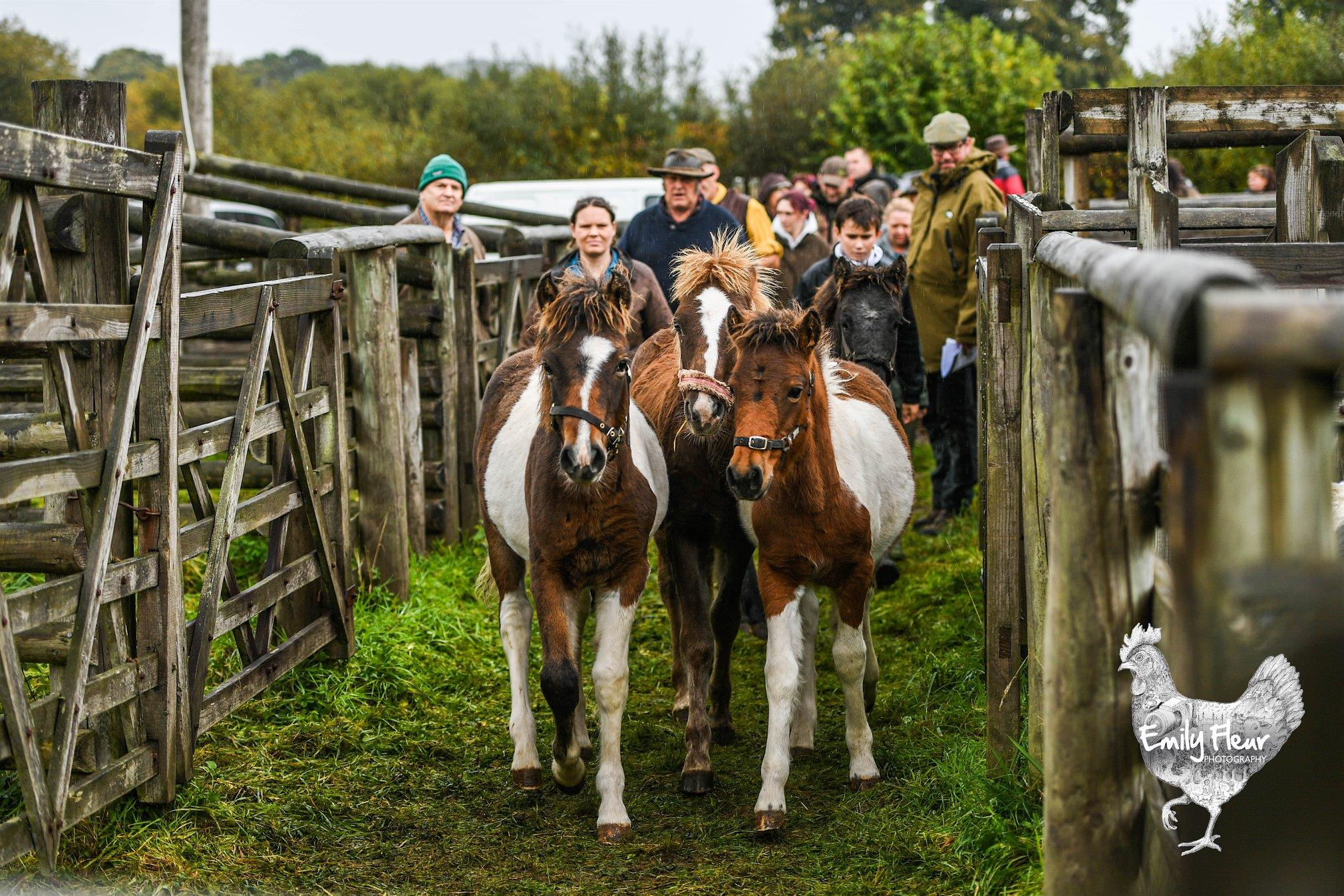 Chagford Pony Sale - Thursday 10th October 2019