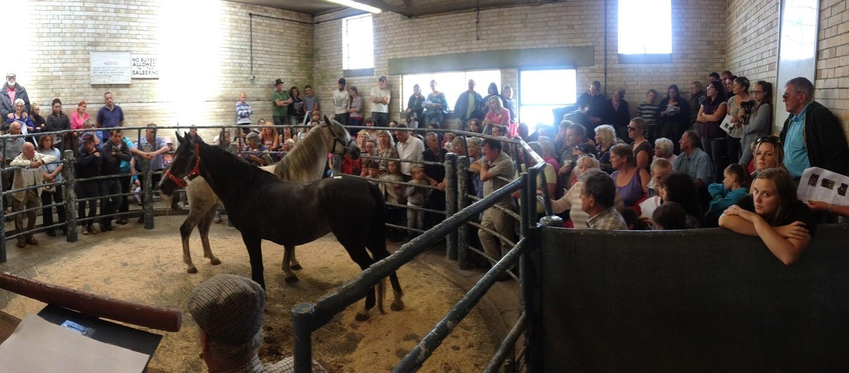 South West Horse & Tack Sale - Wednesday 23rd October 2019