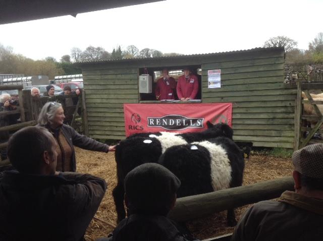 Thursday 26th November - Chagford Suckled Calf Sale